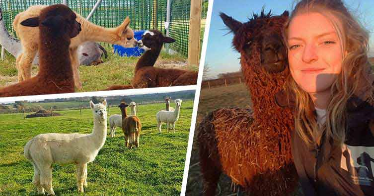 Fulfill the trainee that runs an alpaca ranch in her leisure 6