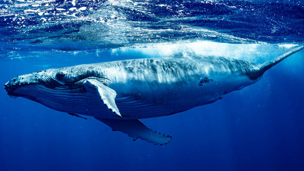 12 Months of Onchain Information Reveals Bitcoin Whales Obtained Thousands Of BTC from Tiny Fish 6