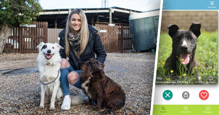 Pupil business owner produces 'dating app' for embracing pets 3