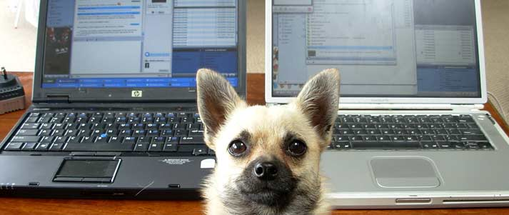 dog in front of laptops