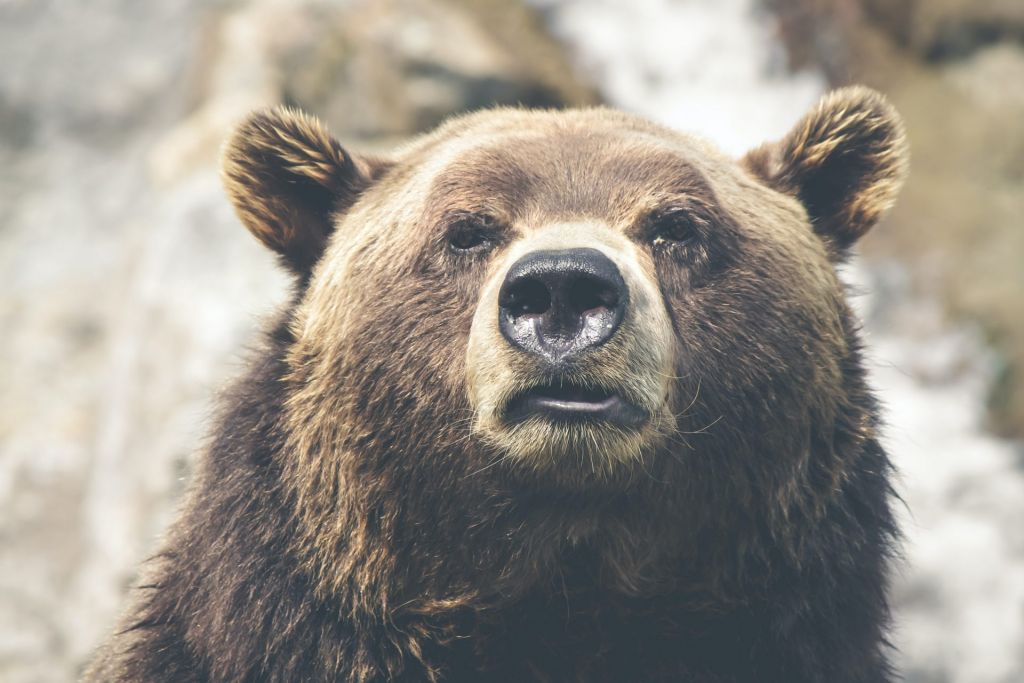 Bitcoin's Cloud Sample Exhibits Bears Could Nonetheless Be in Full Management 1