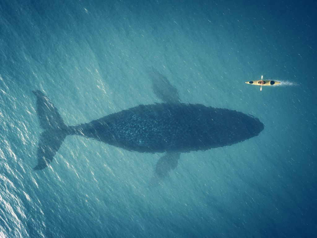 Bitcoin Supply Gradually Moves From Whales Towards Smaller Sized Entities 3