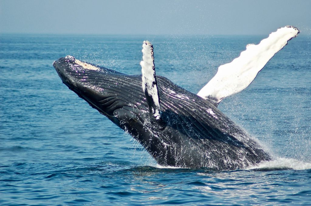 Bitcoin Whales Aren't Marketing Their BTC; It Might Be Boosting Its Price 1