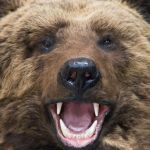 Bitcoin Expert Alerts of Looming 'Bear Cross' as Price Jumps Greater 2