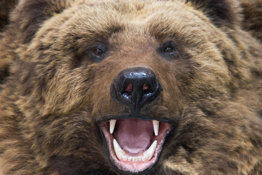 Bitcoin Expert Alerts of Looming 'Bear Cross' as Price Jumps Greater 1