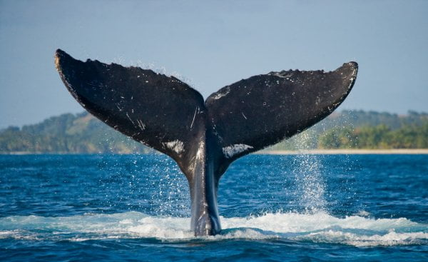 Data Shows Whales Are Loading Up On Bitcoin, But Why? 1