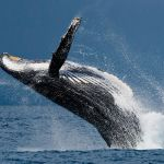 Whale Inflows Into Bitcoin Exchanges Reduce; Is a Healing Ahead? 4