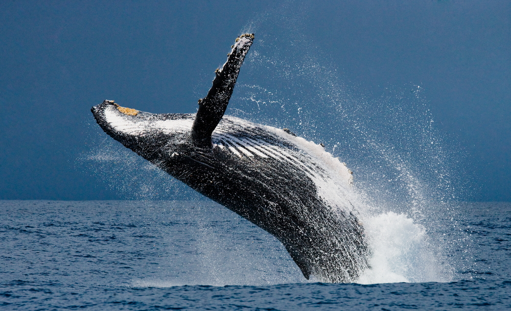 Whale Inflows Into Bitcoin Exchanges Reduce; Is a Healing Ahead? 9