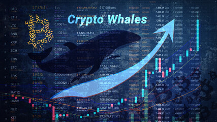 Bitcoin Whale Area Expands As Thanksgiving Nears-- Cryptovibes.com-- Daily Cryptocurrency as well as FX Information 1