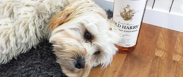 Harry the dog next to a bottle of whisky