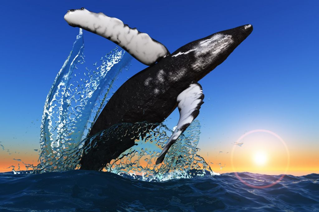 Whales Market Down Bitcoin Rally: Why This Is Essentially Favorable For Crypto 10