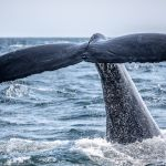 Information Recommends Whales like Protecting One Secret Bitcoin Assistance Degree 6