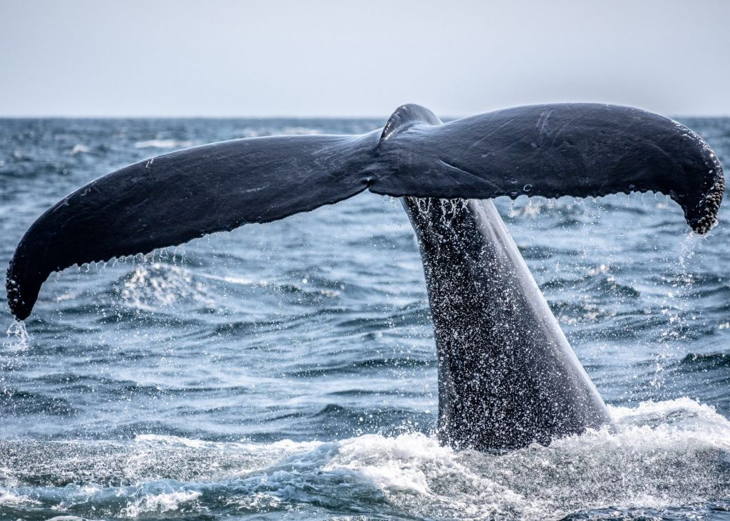 Information Recommends Whales like Protecting One Secret Bitcoin Assistance Degree 1