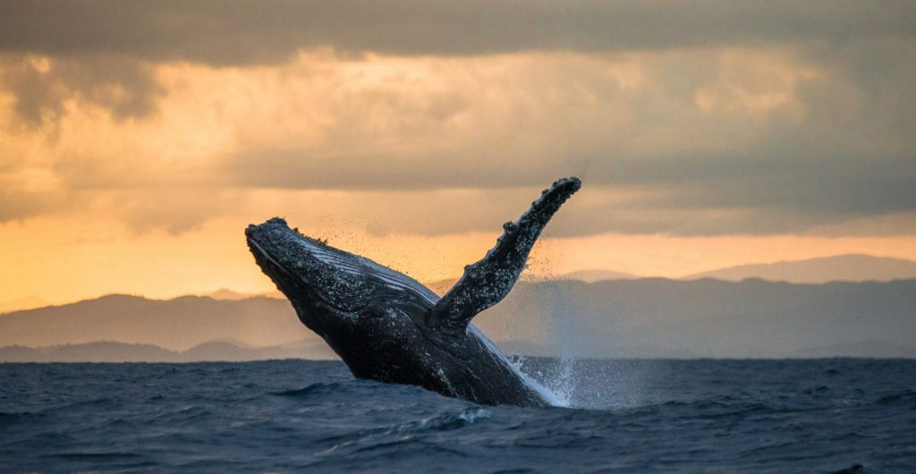 No, A Whale Really Did Not Create Bitcoin To Collision Overnight 2