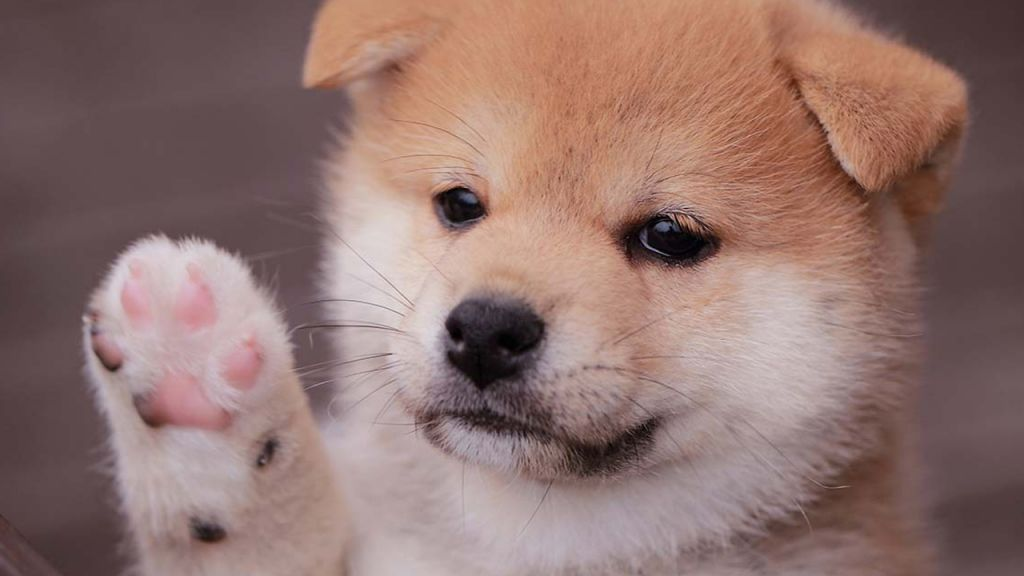 248% Weekly Gains-- Infant Doge Coin Remains To Rally While Many Crypto Property Markets Depression-- Markets and also Rates Bitcoin Information 1