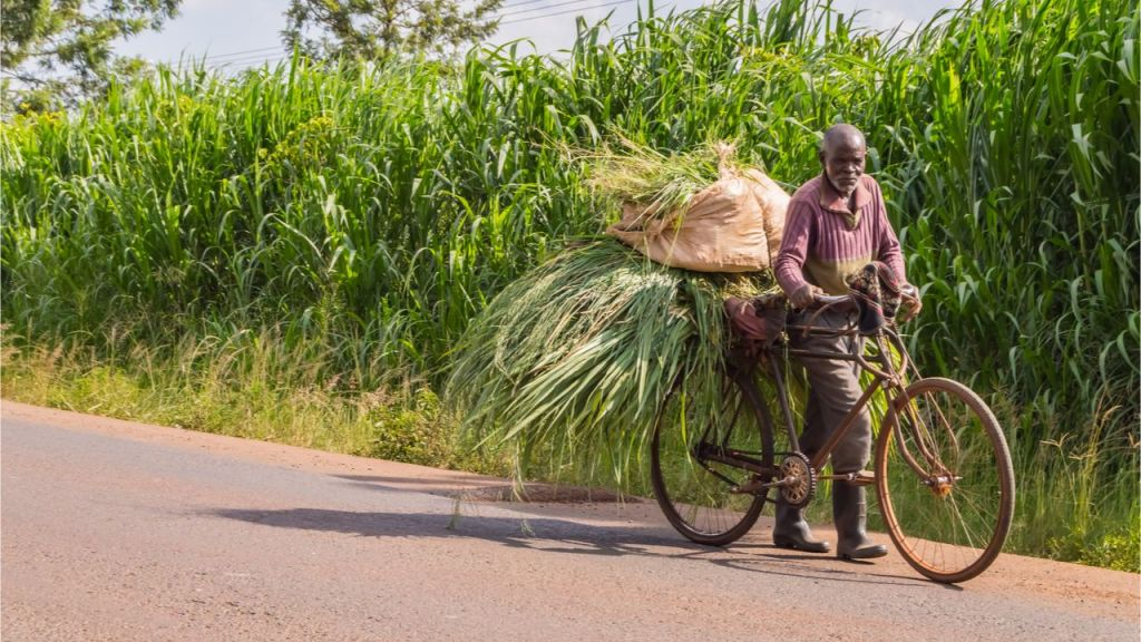 Kenyan Farmers Pivot to Cryptocurrency as Appeal of Neighborhood Currencies Expands-- Altcoins Bitcoin Information 1