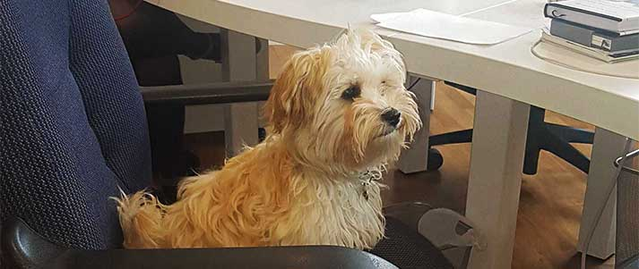 dog sat in office chair
