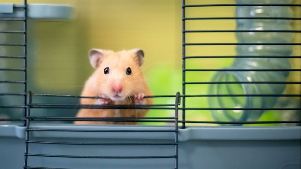 Cryptocurrency-Trading Hamster Surpasses Bitcoin, S& P 500 Given That June-- Bitcoin Information 1