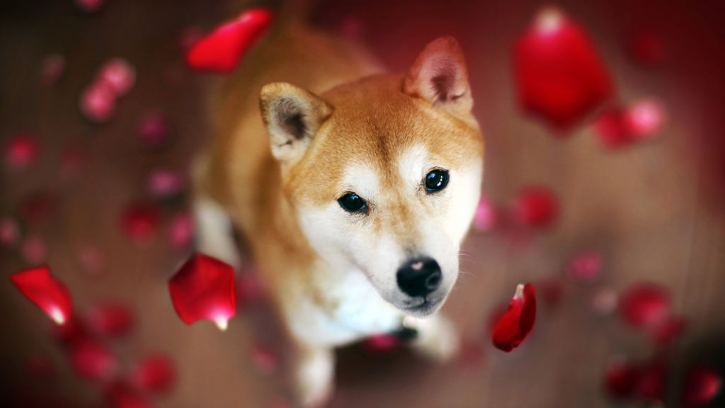 Dogecoin Competing Shiba Inu Spikes in Worth While DOGE Rates Flounder, SHIB Leaps 21% in 24 hr-- Market Updates Bitcoin Information 1