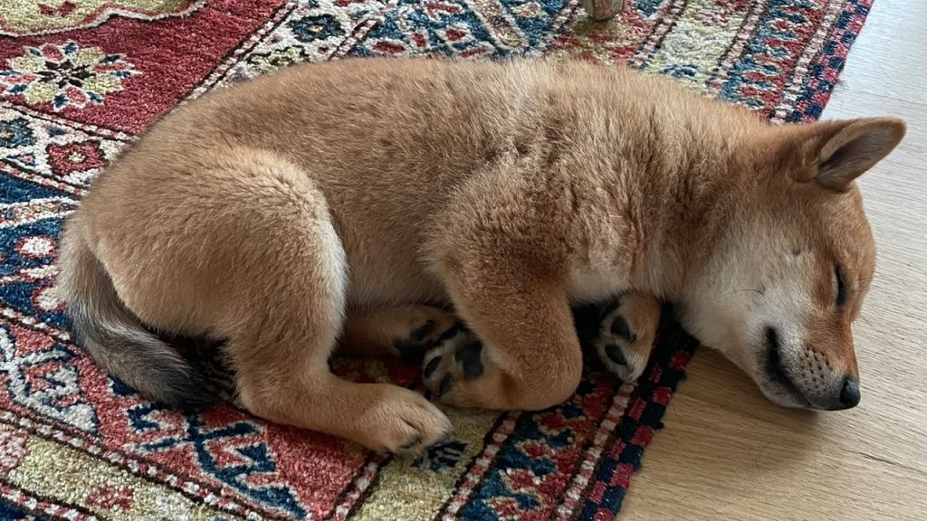 Elon Musk's New Pup Tweet Sends Out Shiba Floki Symbol Rising, FLOKI Leaps Greater Than 900% in 24 hr-- Altcoins Bitcoin Information 1