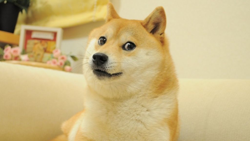 Fractionalizing the Doge NFT, Cryptopunk 543 Obtains Sliced and also Cost $1 per Share-- Information Bitcoin Information 1